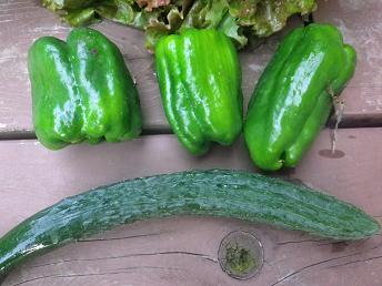 朝採り野菜_a0139242_5185581.jpg