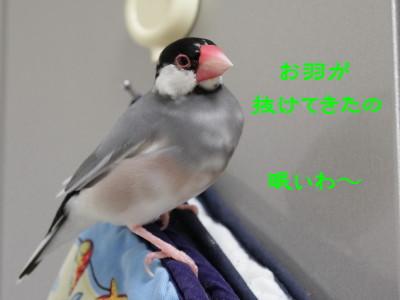 b0158061_21424431.jpg