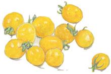 黄色いミニトマト_f0189164_1938872.jpg