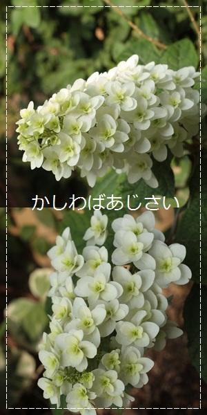 c0167576_18491341.jpg
