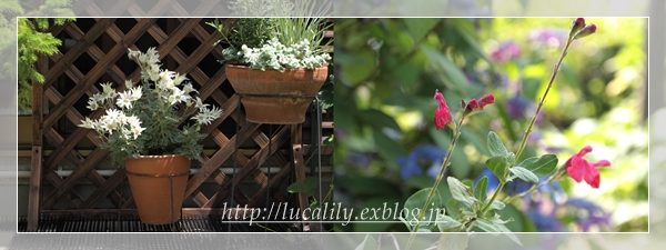 お庭の様子_d0217189_9491145.jpg