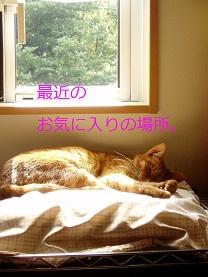 b0200310_20161228.jpg