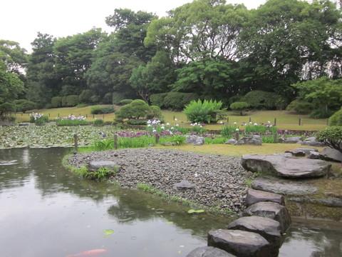 八代 松浜軒の肥後菖蒲 (2012.6月)_b0228113_8441281.jpg