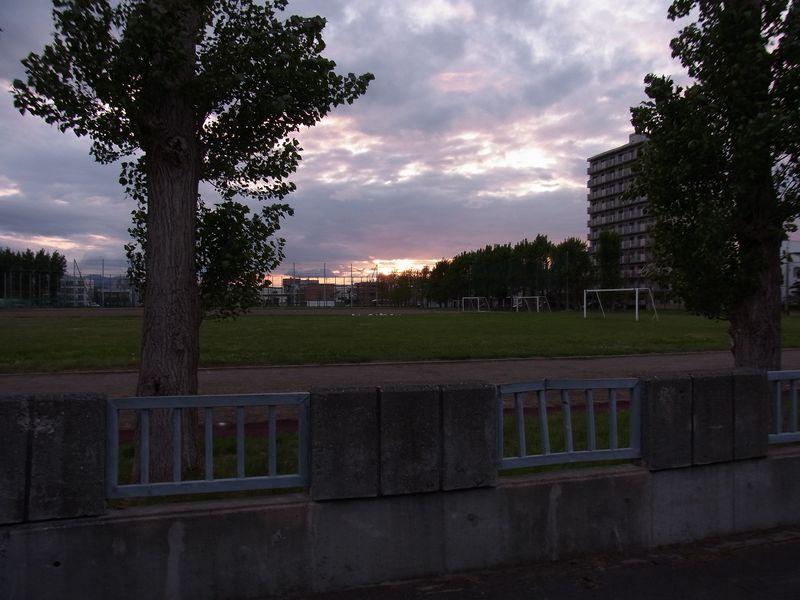 キングサリ アブラナ タマネギ畑と母校の夕日_c0025115_2135667.jpg