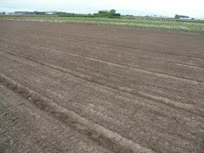 バラ苗生産農家-6月風景です/小さなバラ園byローズスタジオ_b0224889_825063.jpg