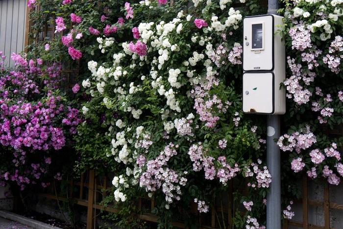 花のある街角_b0074098_22282116.jpg