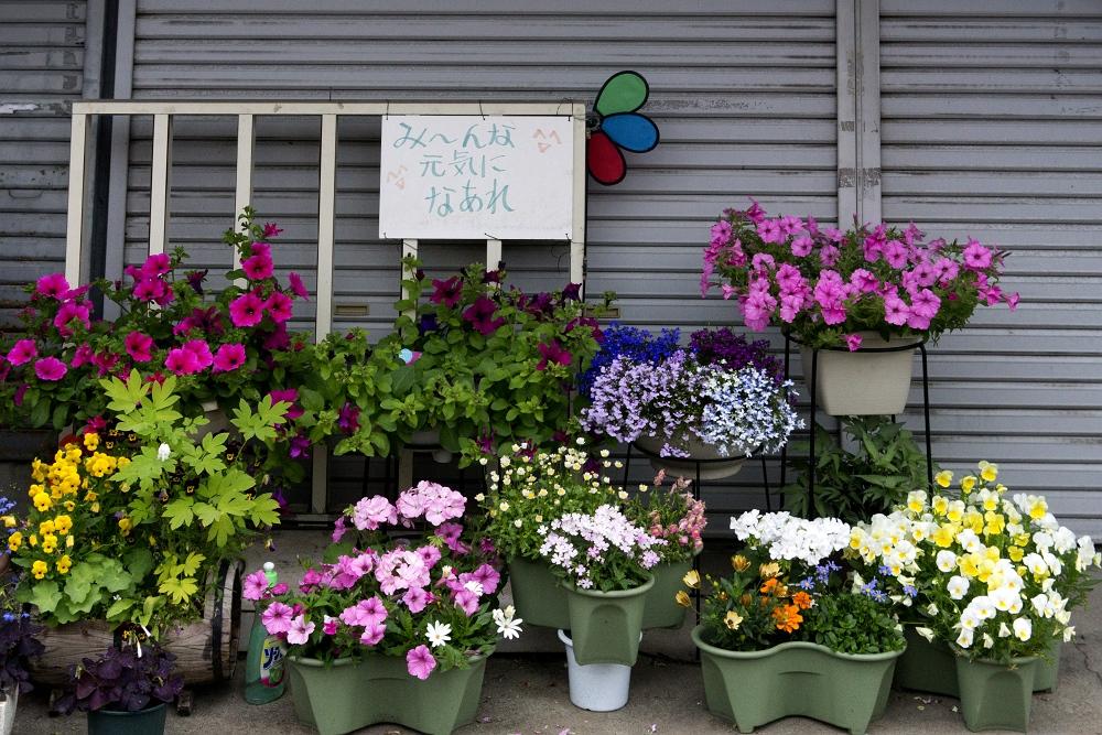 花のある街角_b0074098_22284225.jpg