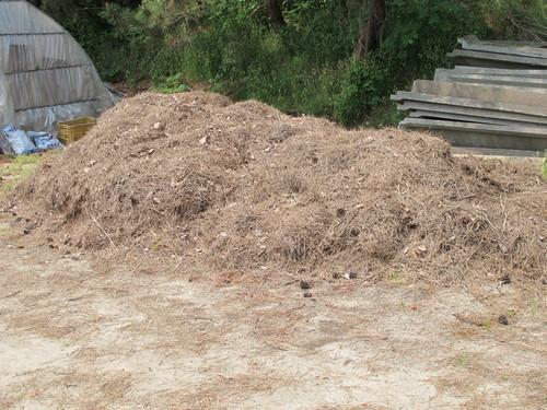 庄内砂丘メロンの美味しさは、愛情と汗の結晶(4)_c0075701_19425220.jpg