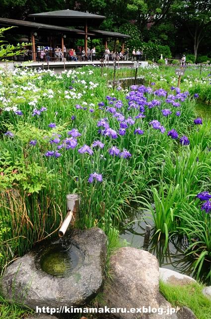 菖蒲園は気分をリフレッシュしてくれました_a0229217_9402680.jpg