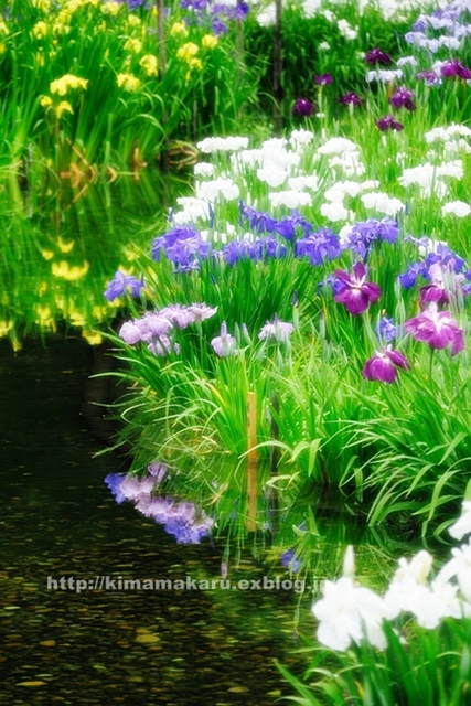 菖蒲園は気分をリフレッシュしてくれました_a0229217_9414549.jpg