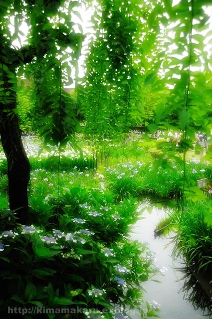 菖蒲園は気分をリフレッシュしてくれました_a0229217_9421090.jpg