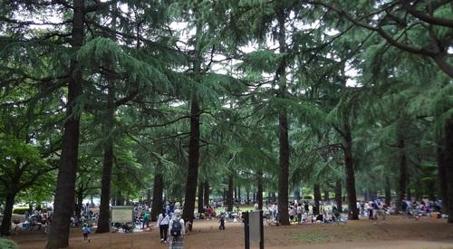 武蔵野公園と野川公園のバーベキュー(BBQ、スッポンの甲羅干し)_e0223735_14442574.jpg