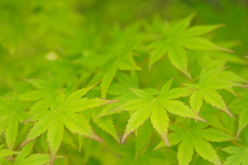 新緑の光明寺..._f0152550_18302993.jpg