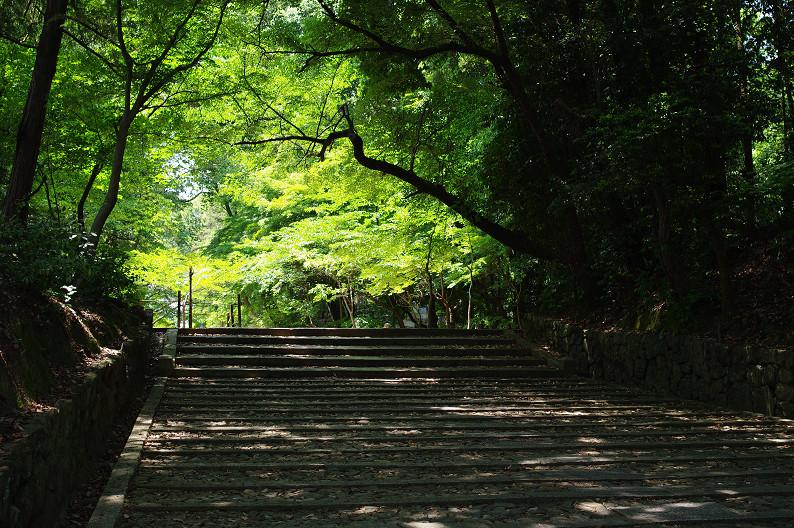 新緑の光明寺..._f0152550_1830631.jpg