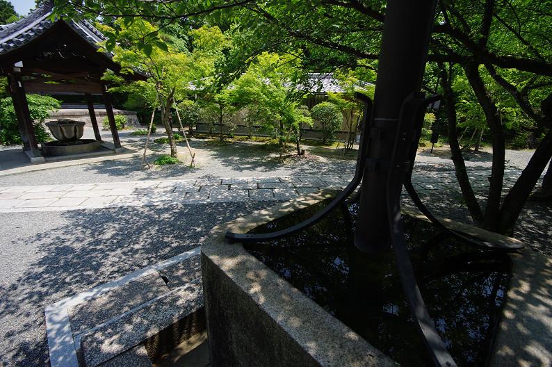 新緑の光明寺..._f0152550_18311226.jpg