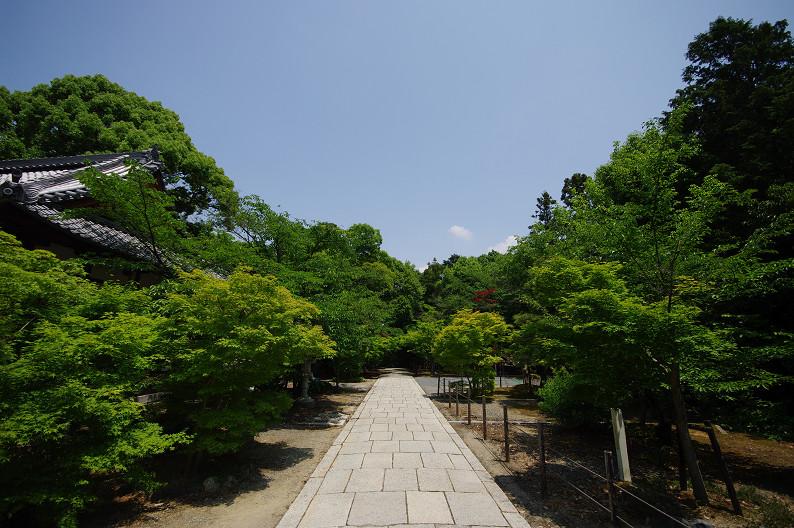 新緑の光明寺..._f0152550_1831183.jpg