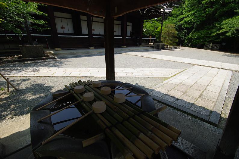 新緑の光明寺..._f0152550_18311837.jpg