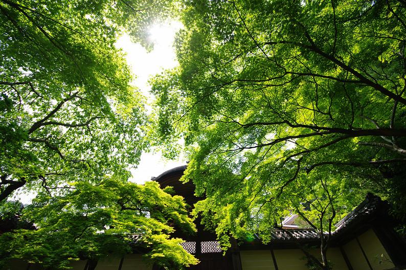 新緑の光明寺..._f0152550_18312855.jpg