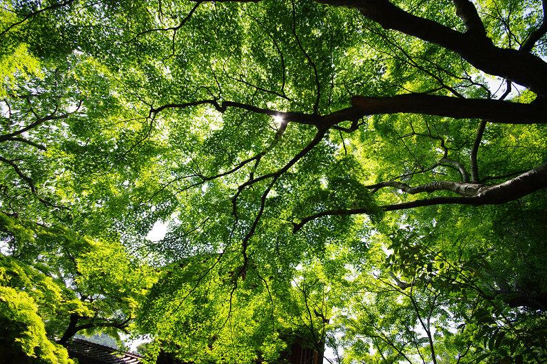 新緑の光明寺..._f0152550_18313864.jpg