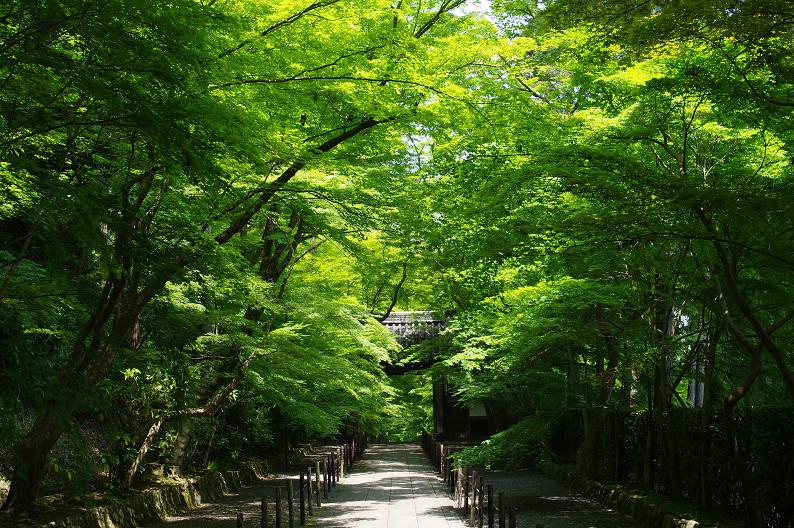 新緑の光明寺..._f0152550_18315081.jpg