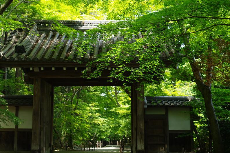 新緑の光明寺..._f0152550_183156100.jpg