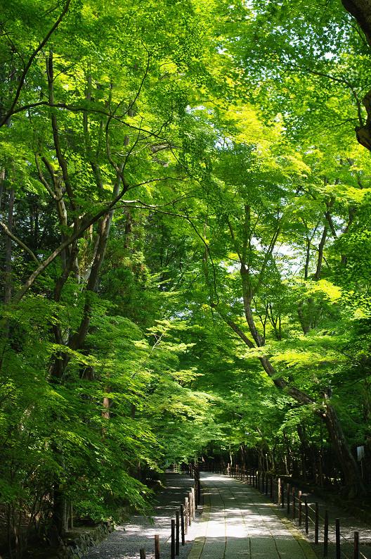 新緑の光明寺..._f0152550_18321097.jpg