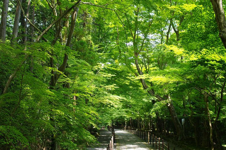 新緑の光明寺..._f0152550_18321793.jpg