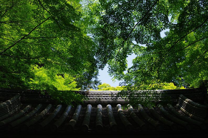 新緑の光明寺..._f0152550_18323385.jpg