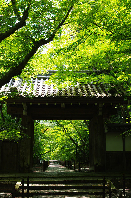 新緑の光明寺..._f0152550_18324720.jpg