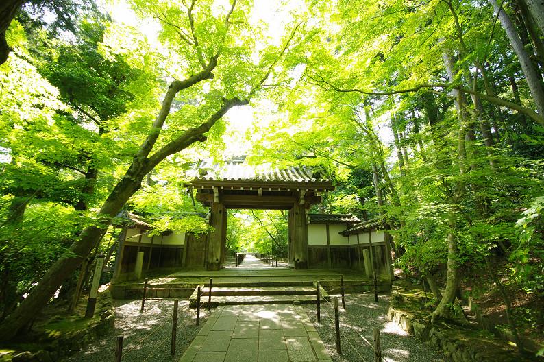 新緑の光明寺..._f0152550_18333025.jpg