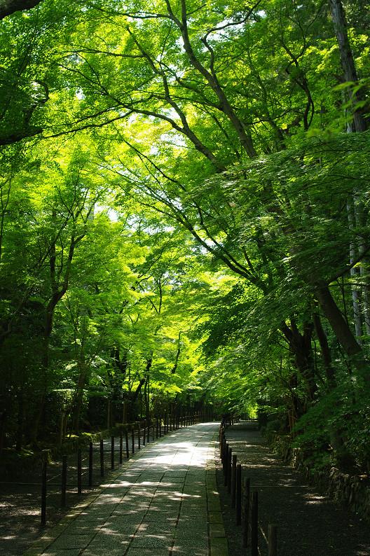 新緑の光明寺..._f0152550_18342361.jpg