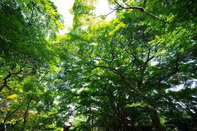 新緑の光明寺..._f0152550_18343534.jpg
