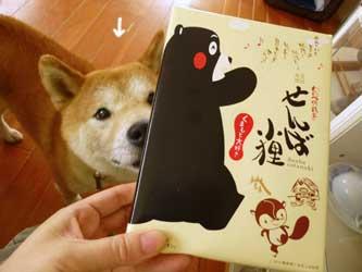 来訪柴犬ズ_b0057675_1855545.jpg