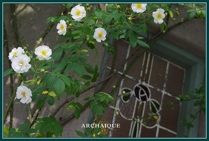 幸福スイーツアルカイック ならまち店 薔薇咲く!!_c0207890_0184717.jpg