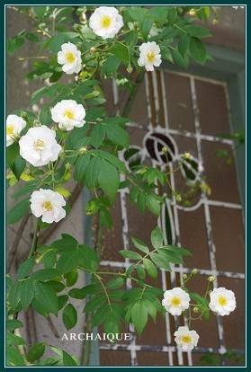 幸福スイーツアルカイック ならまち店 薔薇咲く!!_c0207890_0185787.jpg