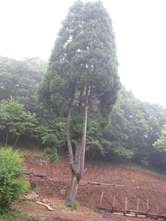 「土壌改良」☆_a0125419_1730713.jpg