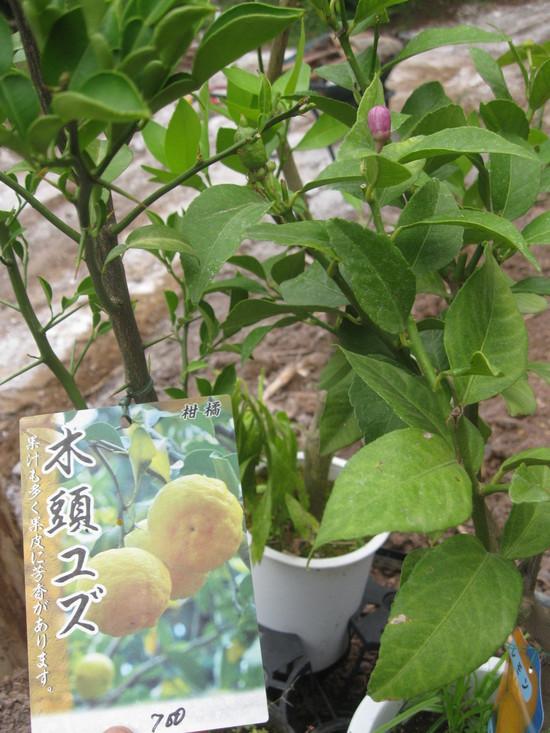 「果実の植林」☆_a0125419_1814481.jpg