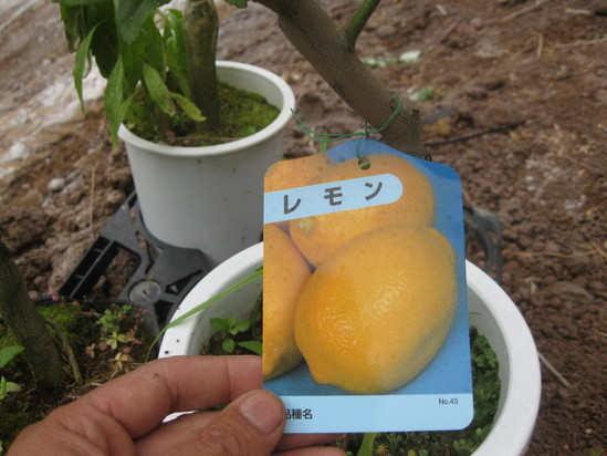 「果実の植林」☆_a0125419_18153527.jpg