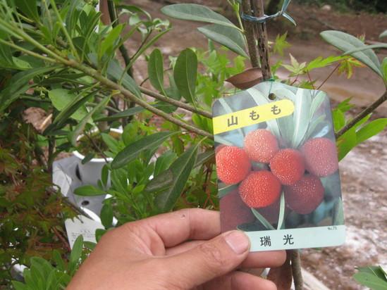 「果実の植林」☆_a0125419_18155653.jpg