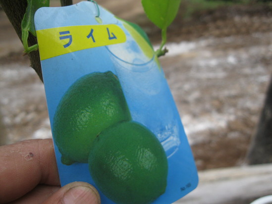 「果実の植林」☆_a0125419_18161854.jpg