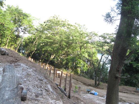 「果実の植林」☆_a0125419_18265545.jpg