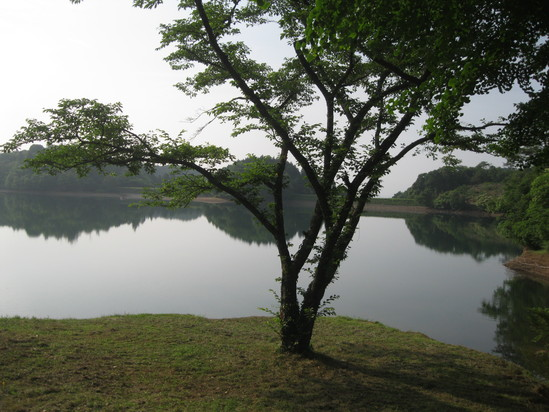「梅の収穫」☆_a0125419_1834392.jpg