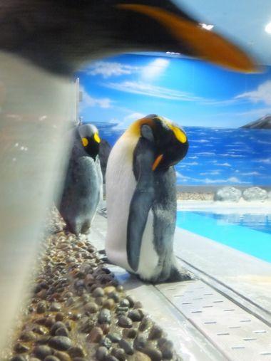 ペンギンおもしろ~い♪ ~福井・松島水族館~_c0152123_23162865.jpg