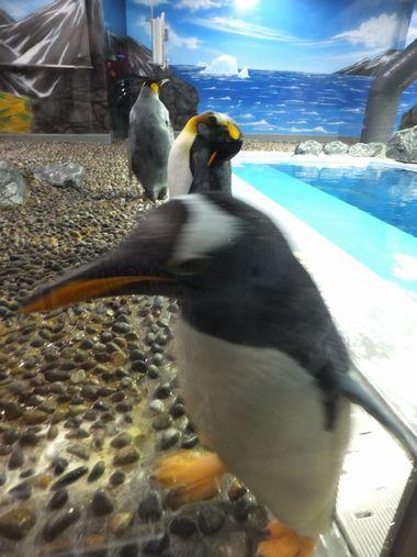 ペンギンおもしろ~い♪ ~福井・松島水族館~_c0152123_2335147.jpg