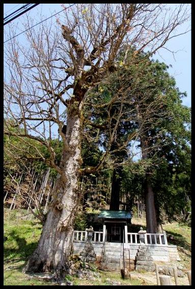 巨樹に怯む_f0053342_1435181.jpg