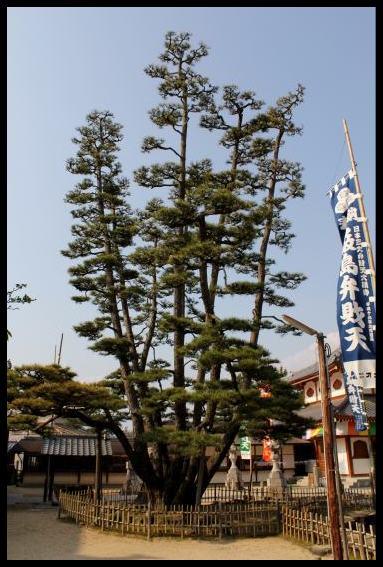 巨樹に怯む_f0053342_1441053.jpg