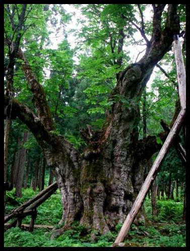 巨樹に怯む_f0053342_144241.jpg
