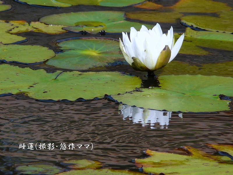 d0244960_20103622.jpg