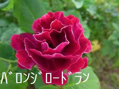 a0193175_16125441.jpg