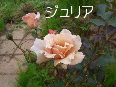 a0193175_16141980.jpg
